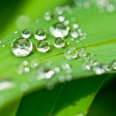 Profiter des bienfaits des plantes en ligne