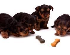 Les accessoires indispensables pour votre chien