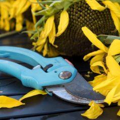 Choisir ses outils pour le jardinage